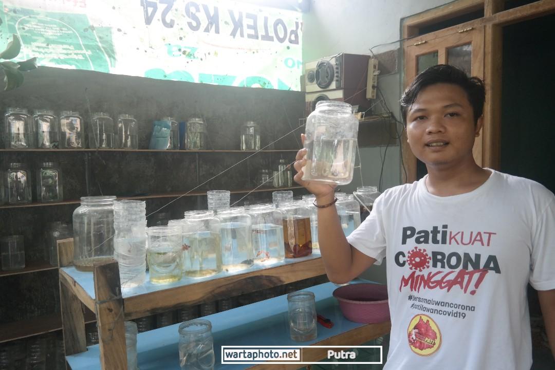 Pemuda Asal Margorejo Manfaatkan Tren Ikan Cupang Sebagai Peluang Usaha Wartaphoto
